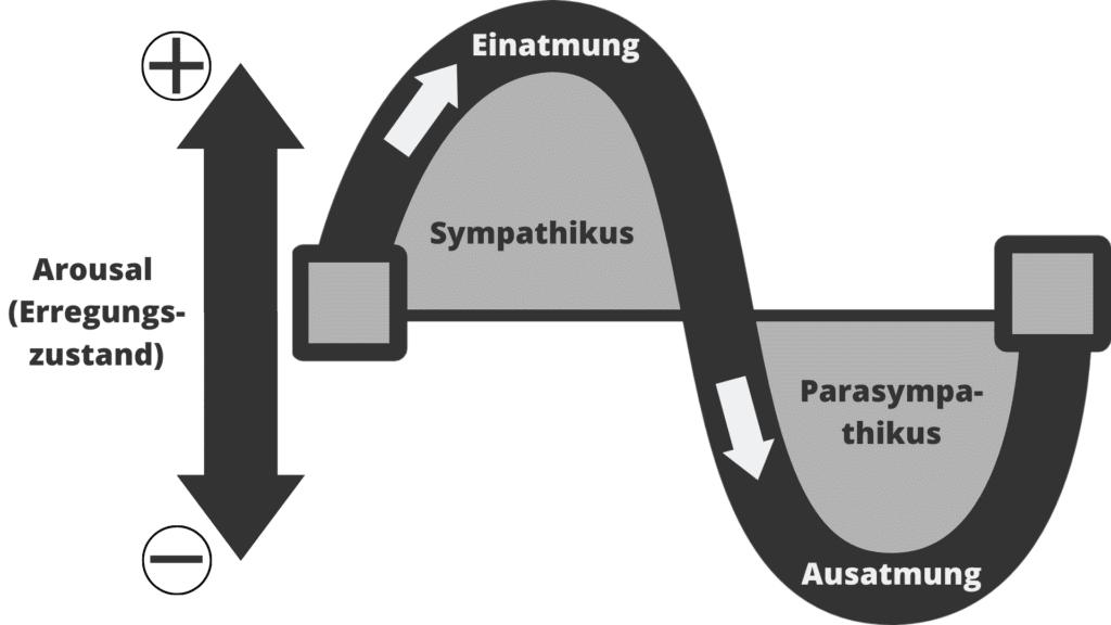 Newsletter Mario Büsdorf Smpathikus und Parasympathikus